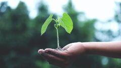 Fundo ESG da Ouro Preto Investimentos investirá em tecnologia de eficiência energética