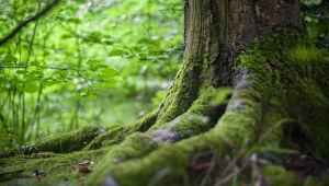 O que é investimento florestal?