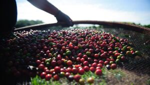 Produção de café da Colômbia sobe pela 1ª vez desde abril
