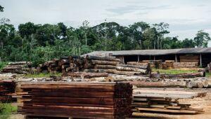 SP cria força-tarefa para combater venda ilegal de madeira nativa