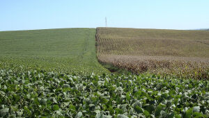 Soja recua com grande safra nos EUA; trigo e milho também caem