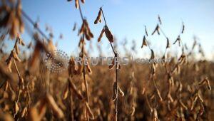 Inter (SA:BIDI11): Mesmo com problemas climáticos, ano do agronegócio continua forte