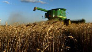 IGC eleva projeção para safra mundial de milho 2021/22