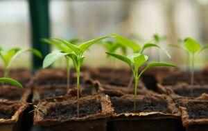 Busca online por produtos sustentáveis cresceu 71% em 2020, aponta estudo