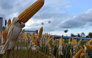 Vinci Partners e Chrimata criam joint venture para investimentos no agronegócio