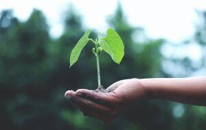 Bradesco lança dois fundos de previdência com foco em ESG