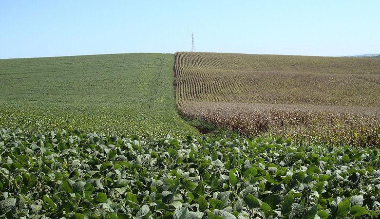 Lavouras de soja (à esquerda) e milho no Brasil, em 2008