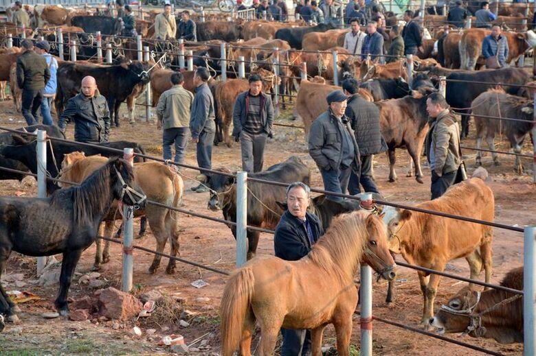Mercado de animais na China